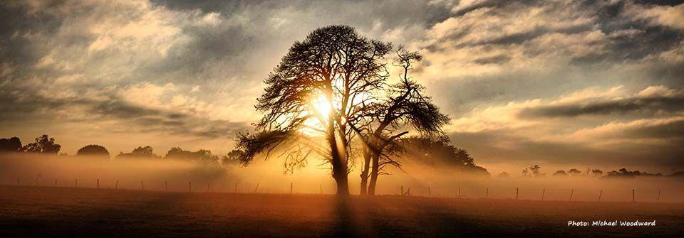 Poesía desde la infancia – Eres aquel árbol