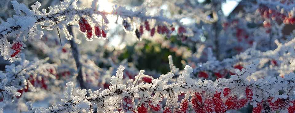 Latidos de jardín y otros poemas